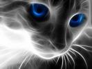 Katze[1]